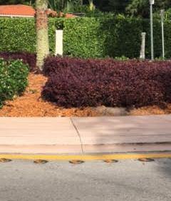 purple-hedge-2